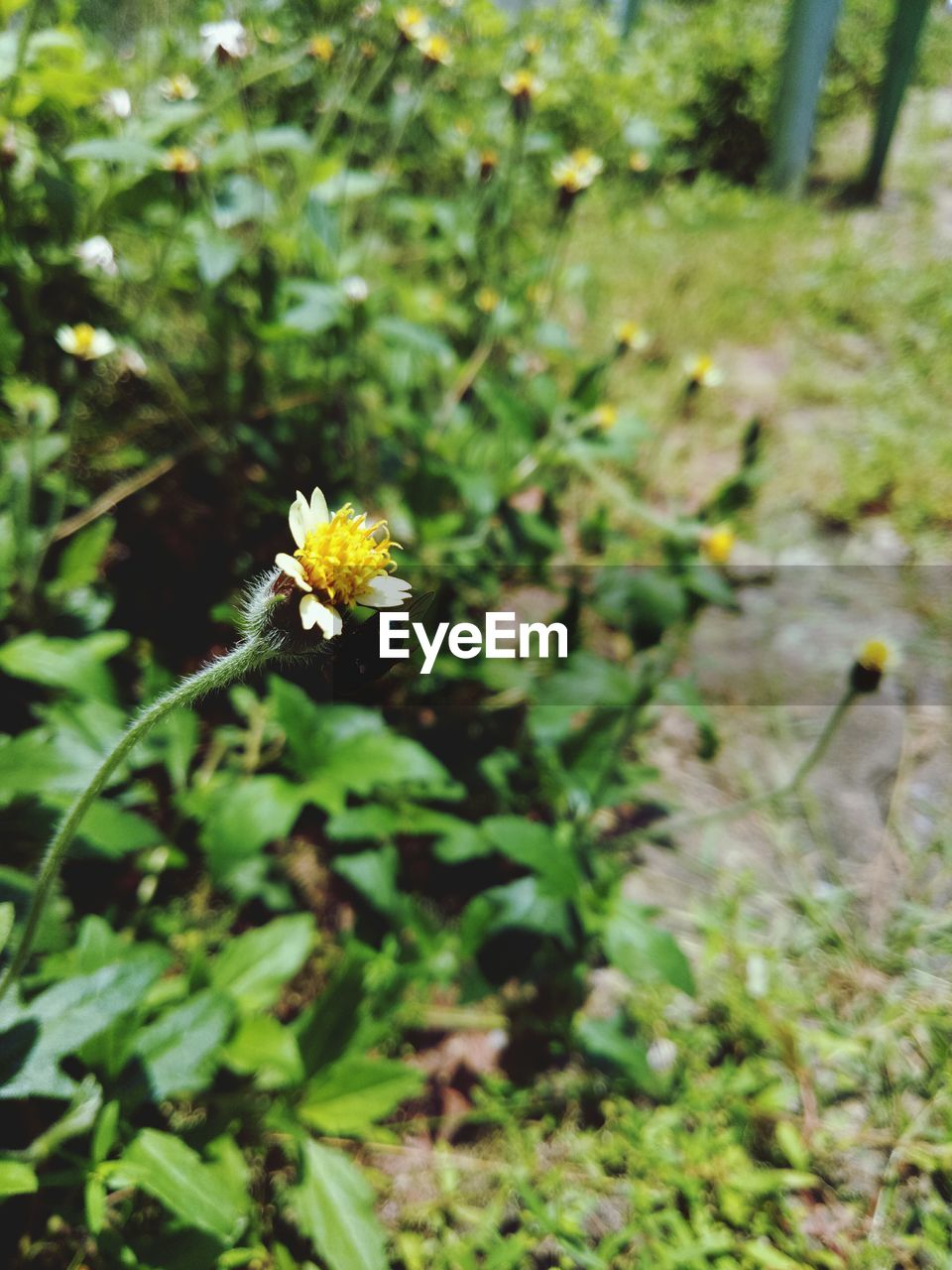 flower, growth, nature, fragility, yellow, outdoors, plant, day, beauty in nature, freshness, flower head, no people, blooming, close-up