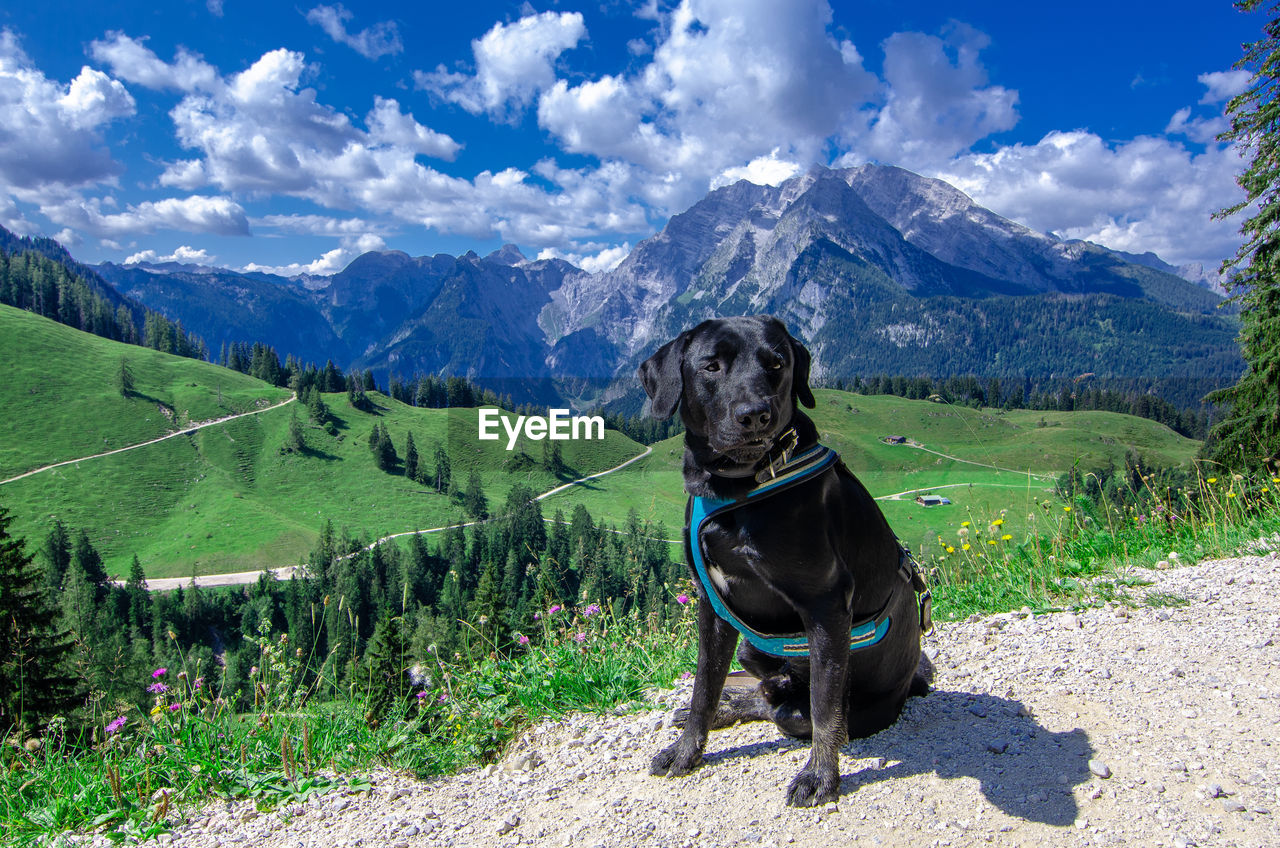 VIEW OF A DOG STANDING ON LANDSCAPE