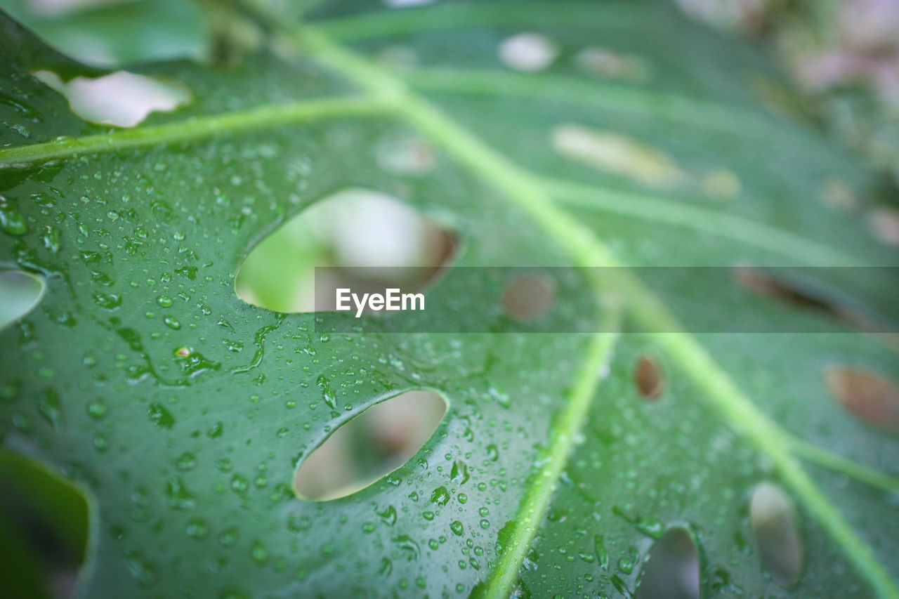leaf, drop, green color, close-up, nature, water, freshness, wet, plant, no people, growth, day, beauty in nature, fragility, full frame, backgrounds, outdoors