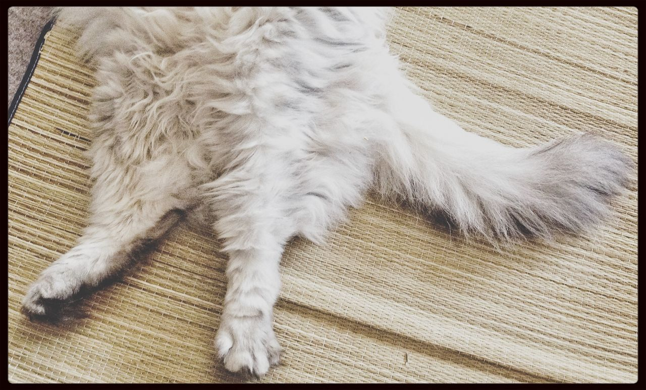 Top view of a feline relaxing