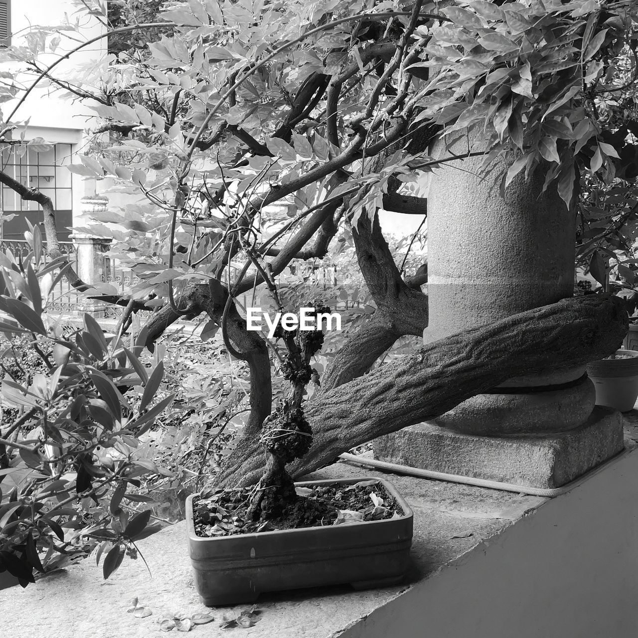 plant, growth, no people, nature, tree, day, potted plant, built structure, architecture, outdoors, close-up, beauty in nature, flowering plant, flower, plant part, bonsai tree, branch, fragility, wall - building feature, building exterior
