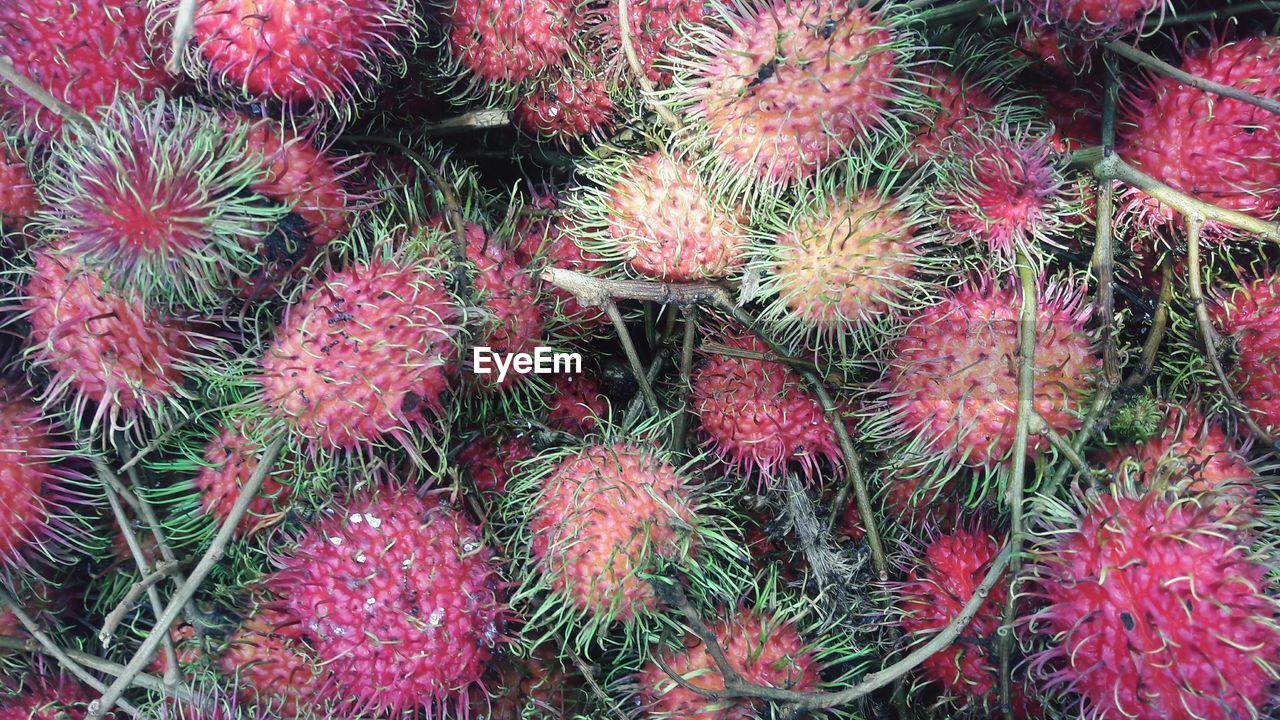 fruit, food and drink, full frame, healthy eating, red, food, freshness, backgrounds, no people, close-up, tropical fruit, wellbeing, high angle view, market, retail, abundance, green color, large group of objects, spiked, for sale, spiky, ripe, lychee