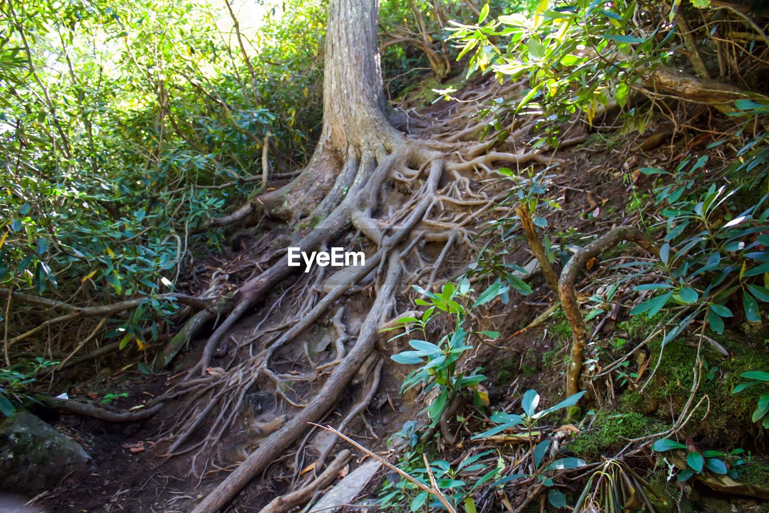 VIEW OF TREE ROOTS