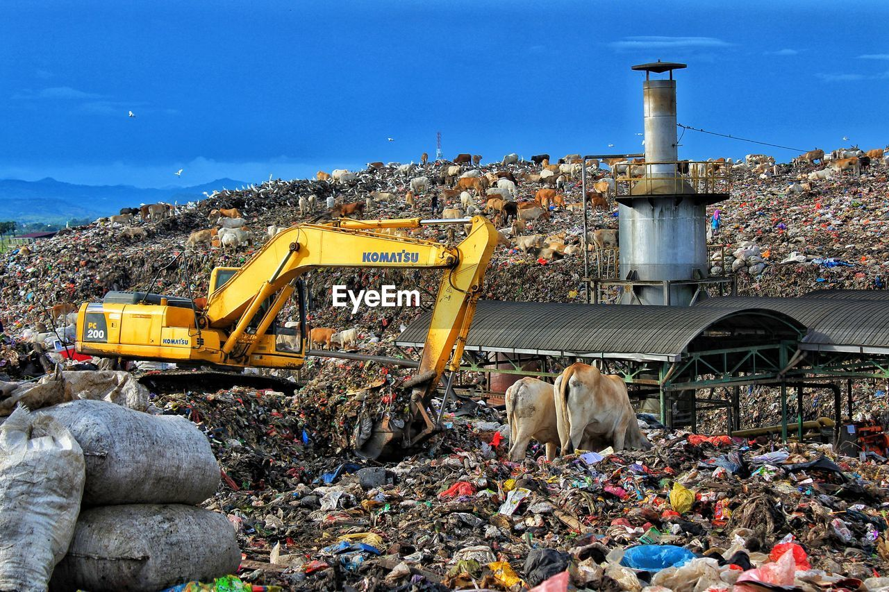 construction site, day, architecture, garbage, built structure, industry, animal themes, sky, outdoors, building exterior, no people