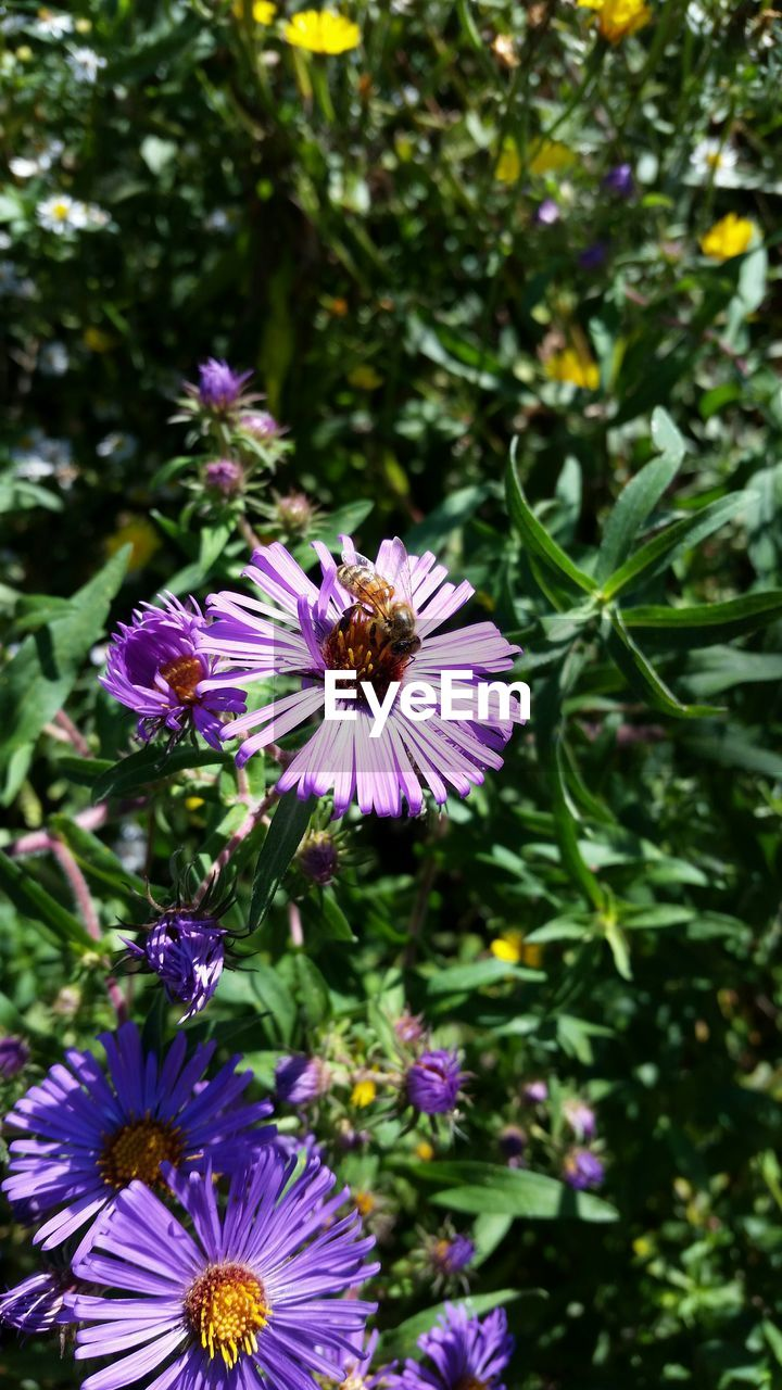 flower, purple, fragility, petal, nature, beauty in nature, growth, freshness, flower head, day, no people, plant, focus on foreground, blooming, outdoors, one animal, osteospermum, close-up, animal themes, eastern purple coneflower