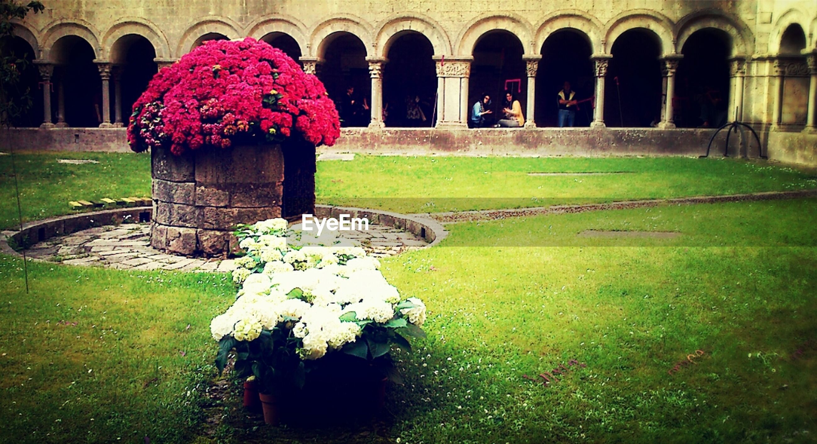 flower, arch, built structure, architecture, grass, plant, formal garden, lawn, petal, growth, building exterior, fragility, freshness, park - man made space, day, nature, outdoors, garden, green color, architectural column