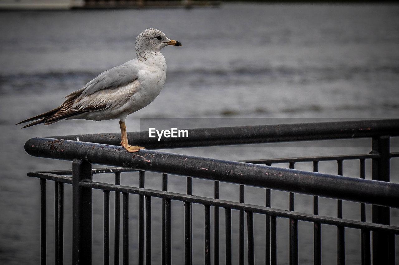 BIRD PERCHING ON WOODEN WALL