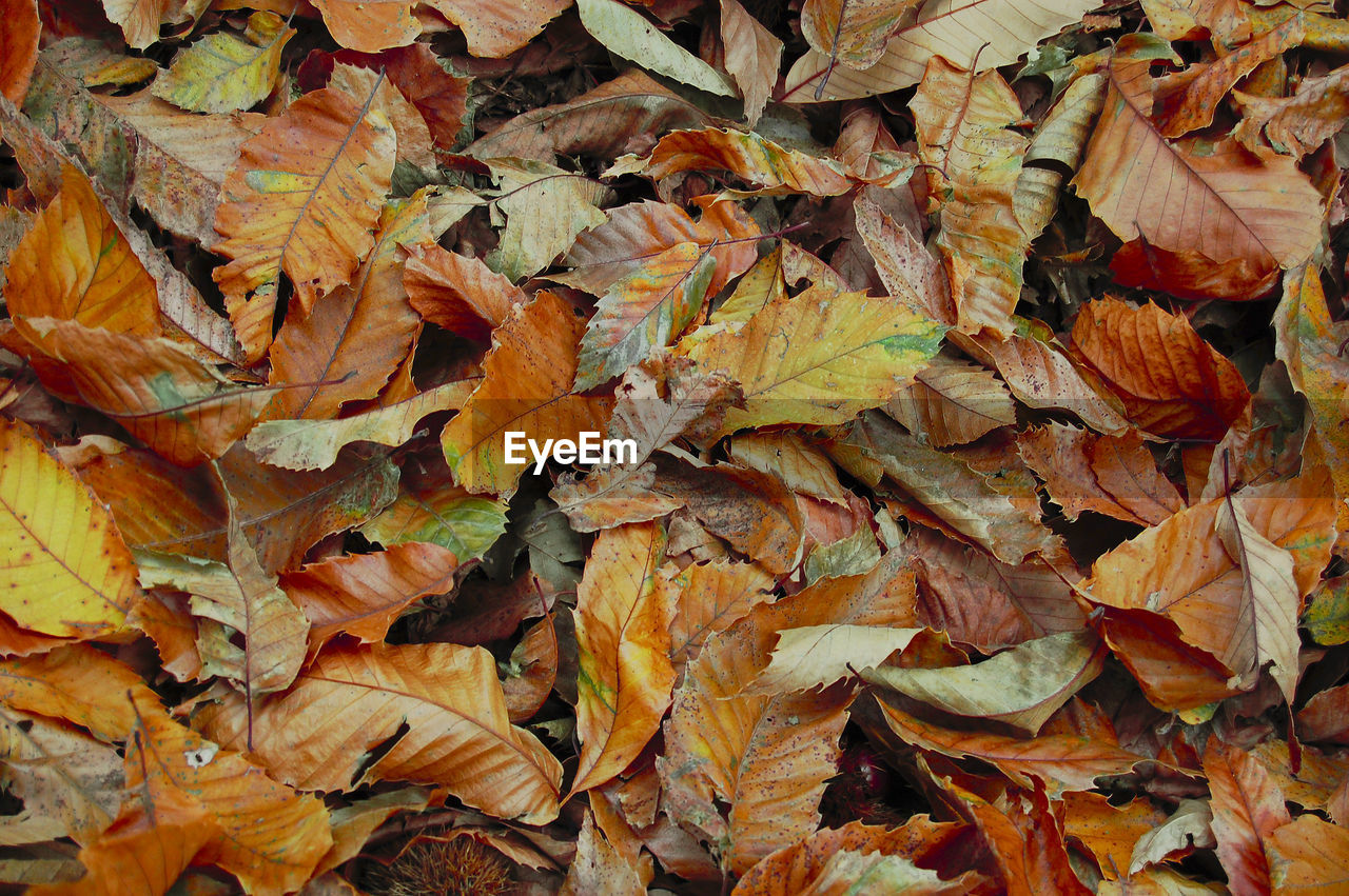 leaf, plant part, autumn, change, full frame, leaves, backgrounds, dry, no people, day, nature, beauty in nature, close-up, field, plant, orange color, abundance, high angle view, land, falling, maple leaf, outdoors, natural condition, fall
