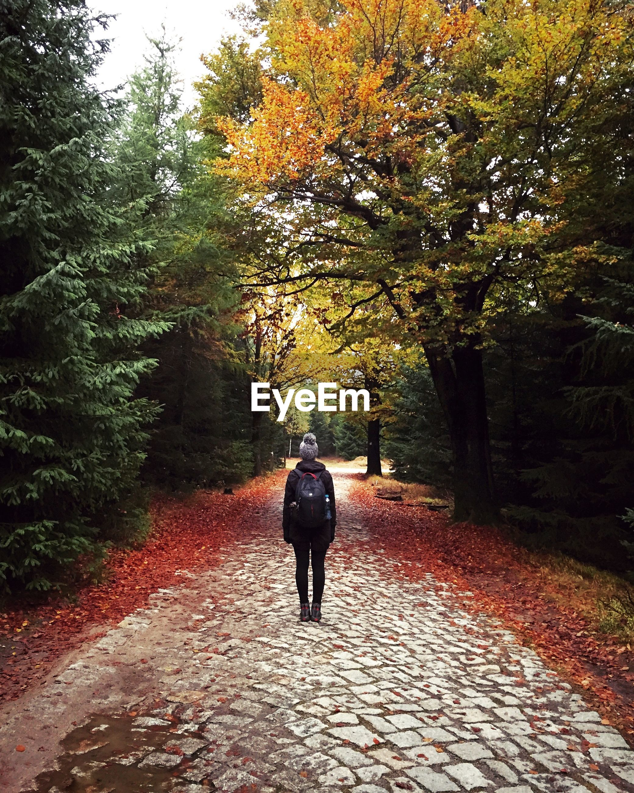 Rear view of woman with backpack standing on street amidst trees in forest during autumn