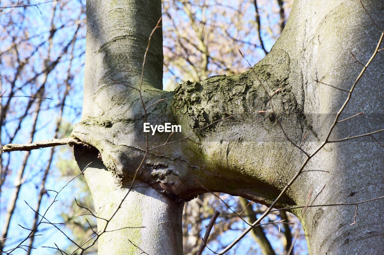 tree, focus on foreground, plant, tree trunk, branch, trunk, nature, day, no people, low angle view, outdoors, close-up, bare tree, sky, textured, body part, sunlight, bone
