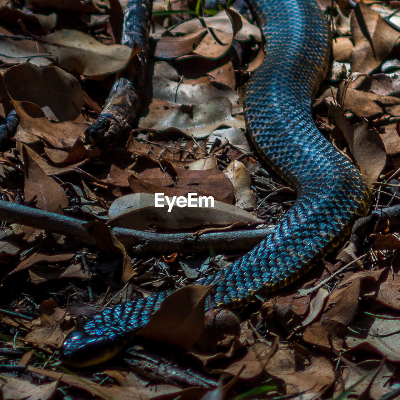 animal themes, animal, animal wildlife, animals in the wild, one animal, vertebrate, reptile, snake, nature, leaf, no people, plant part, day, land, animal body part, field, high angle view, sign, warning sign, outdoors, animal head, animal scale, leaves, poisonous