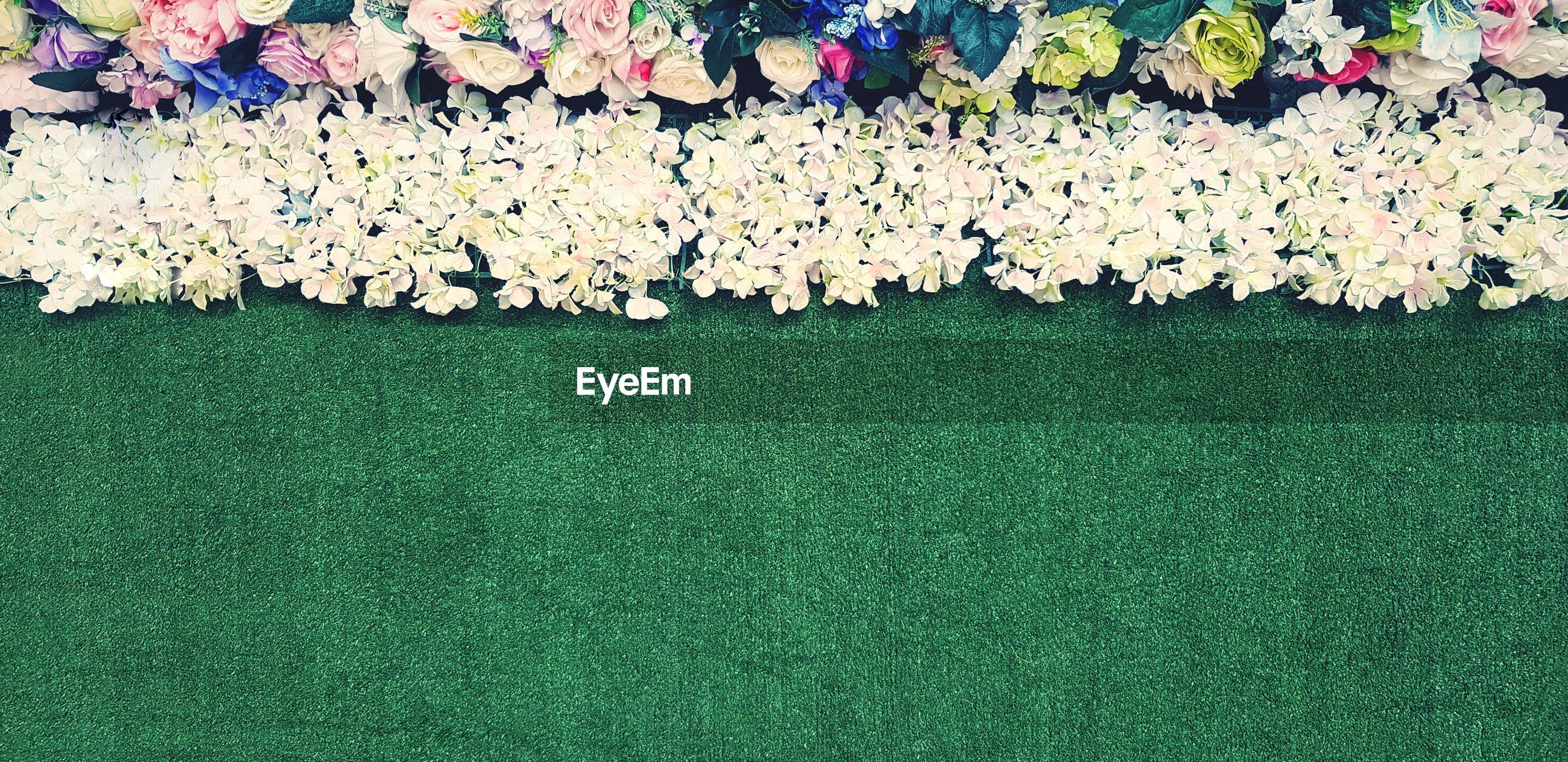 DIRECTLY BELOW SHOT OF WHITE FLOWERING PLANTS