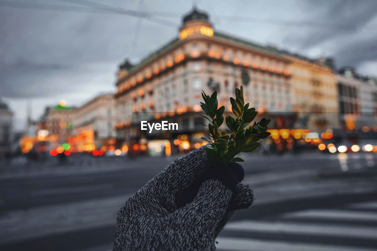 Cropped Hand Holding Plant Against Buildings In City