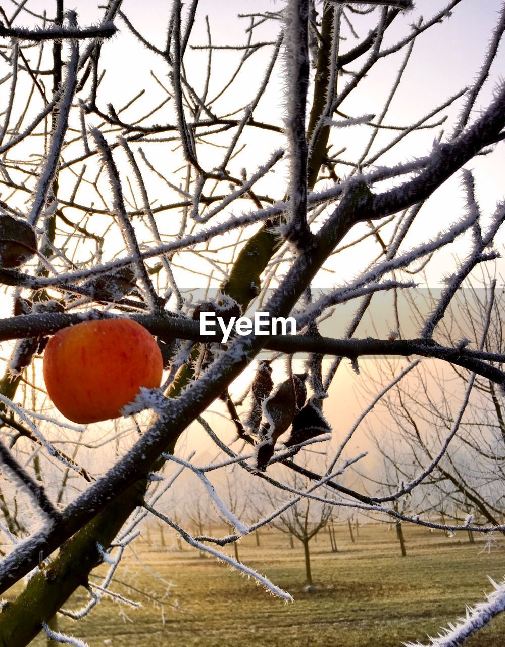 tree, bare tree, branch, no people, nature, day, outdoors, winter, beauty in nature, close-up, sky