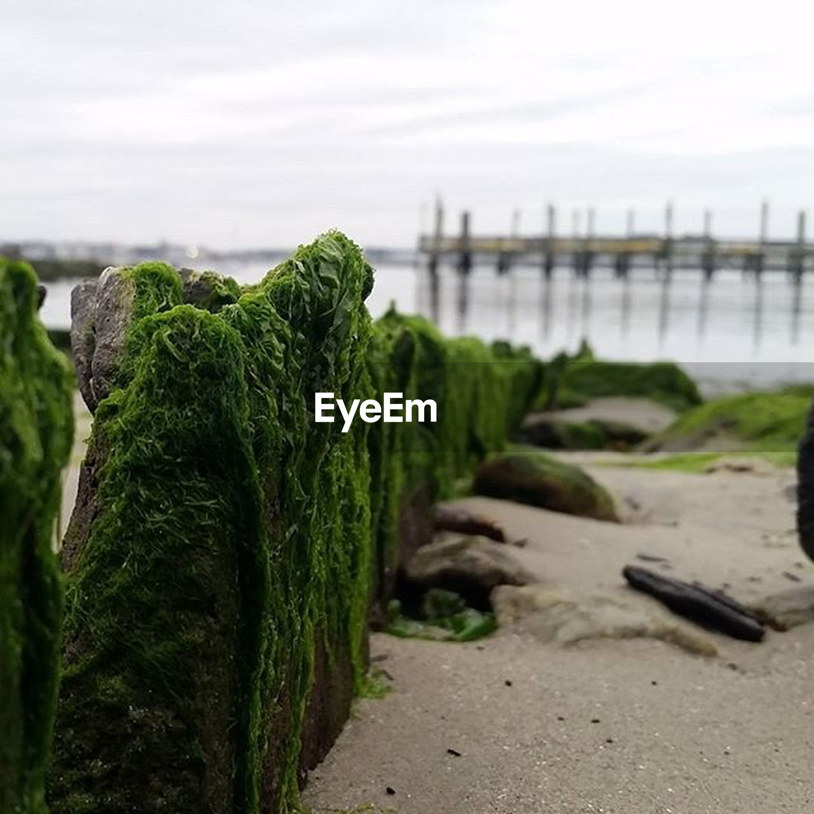 green color, rock - object, sea, nature, sky, tranquility, beach, focus on foreground, plant, moss, water, tranquil scene, rock, growth, day, outdoors, close-up, beauty in nature, shore, sand