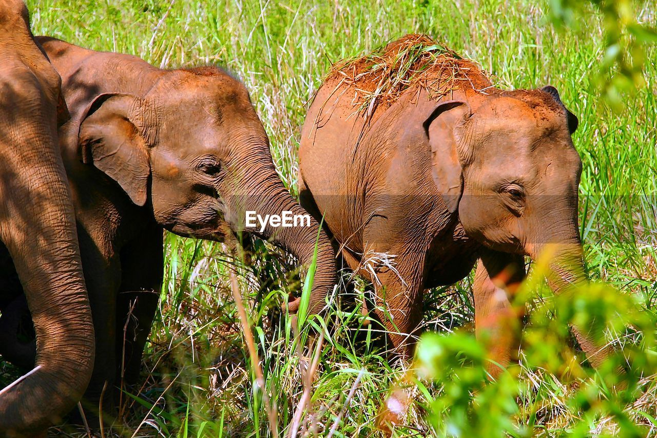 animal, mammal, animal themes, animals in the wild, elephant, group of animals, animal wildlife, vertebrate, plant, no people, land, day, forest, field, young animal, grass, nature, safari, two animals, herbivorous, animal family, outdoors, animal trunk