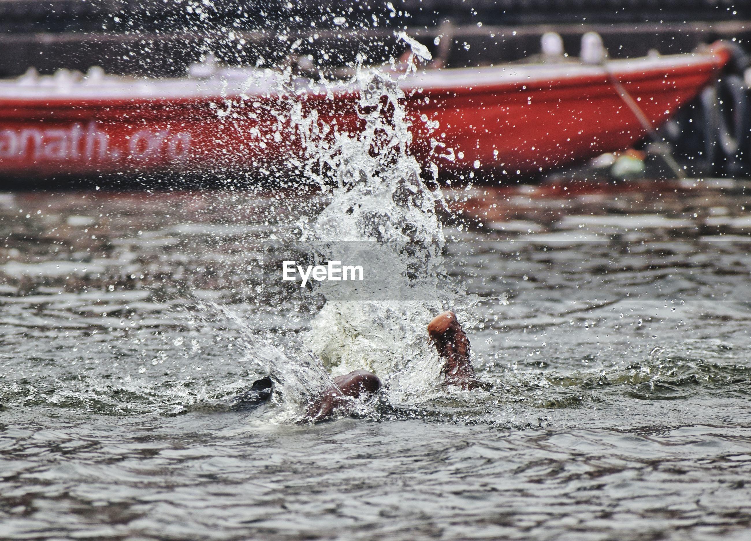 Bird splashing water in lake