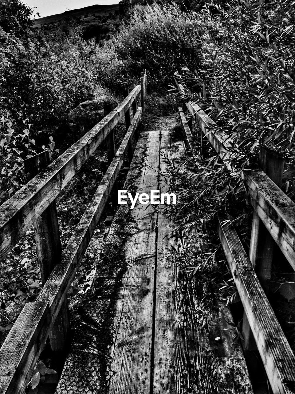 Abandoned Wooden Footbridge Amidst Plants At Forest