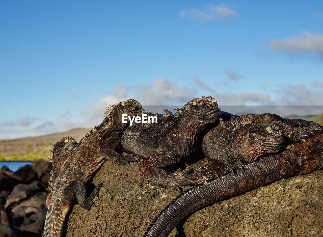 sky, focus on foreground, nature, day, no people, close-up, textured, rusty, outdoors, animal wildlife, animal, animal themes, solid, animals in the wild, metal, rock, rough, cloud - sky, sunlight, land, iguana