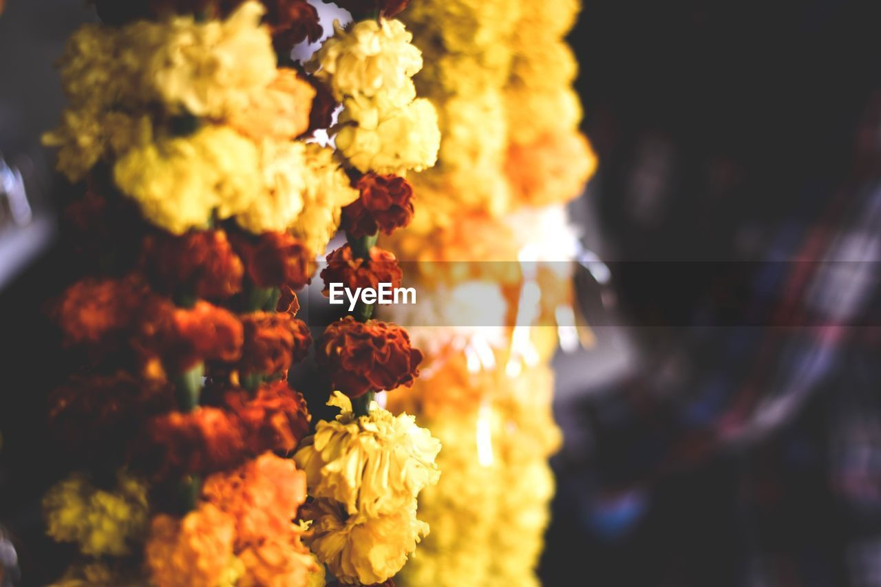 flower, fragility, freshness, petal, flower head, bouquet, close-up, no people, marigold, beauty in nature, nature, outdoors, flower market, day