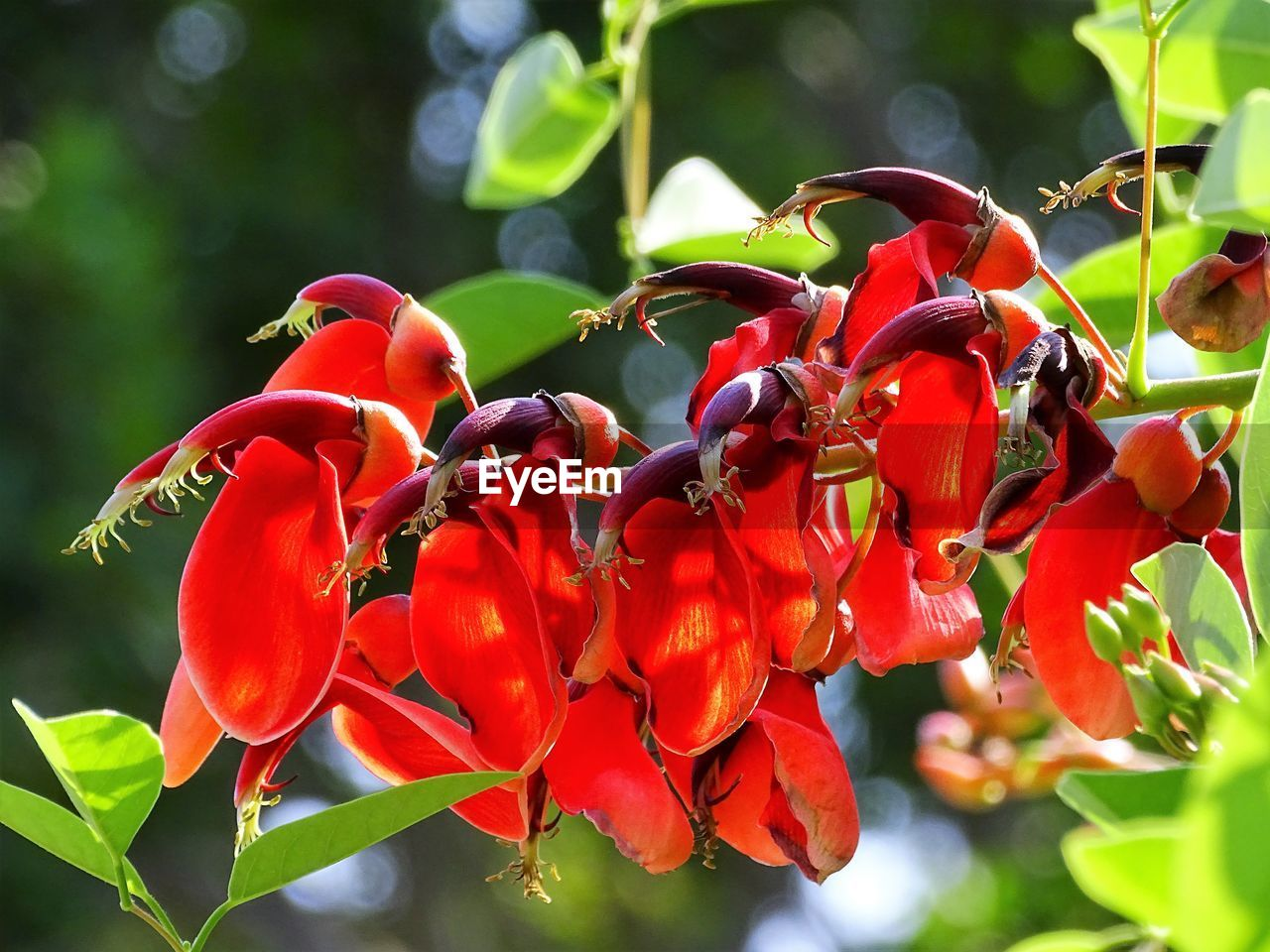 red, plant, growth, beauty in nature, close-up, plant part, leaf, freshness, flower, nature, flowering plant, day, no people, focus on foreground, vulnerability, fruit, petal, fragility, flower head, tree, outdoors, rowanberry