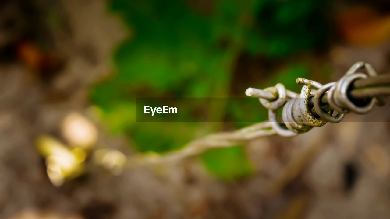 no people, focus on foreground, selective focus, close-up, outdoors, day, green color, tap, nature