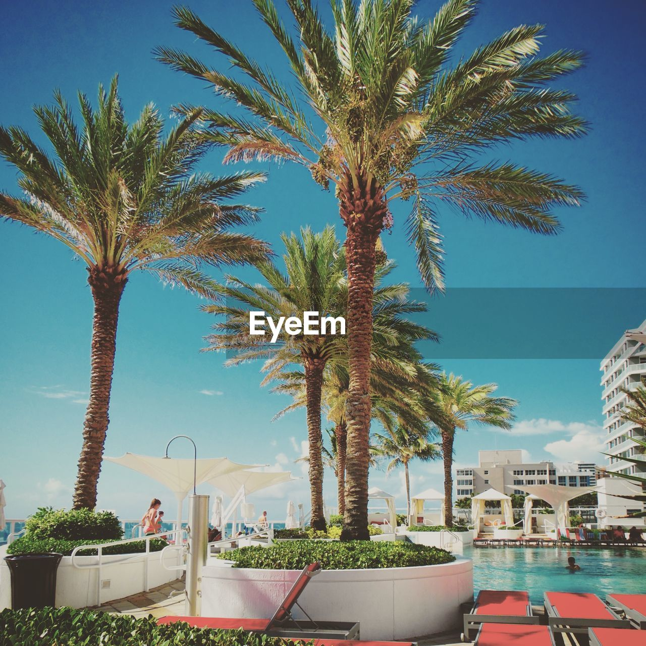 palm tree, tree, day, sky, growth, outdoors, real people, swimming pool, clear sky, water, nature, building exterior, architecture, city