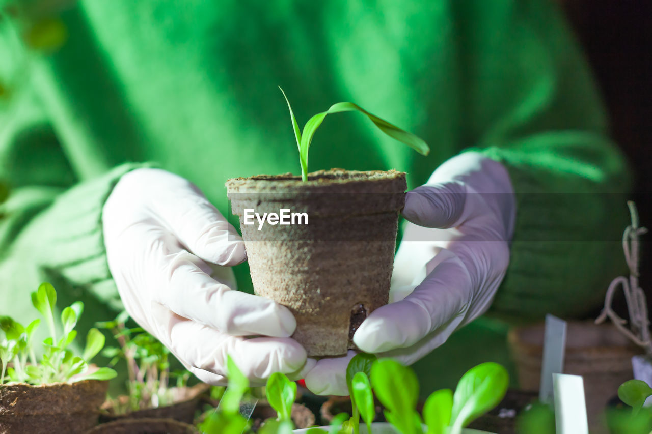 green color, plant, one person, growth, holding, human hand, nature, real people, gardening, potted plant, hand, leaf, plant part, seedling, planting, protective workwear, human body part, beauty in nature, focus on foreground, beginnings