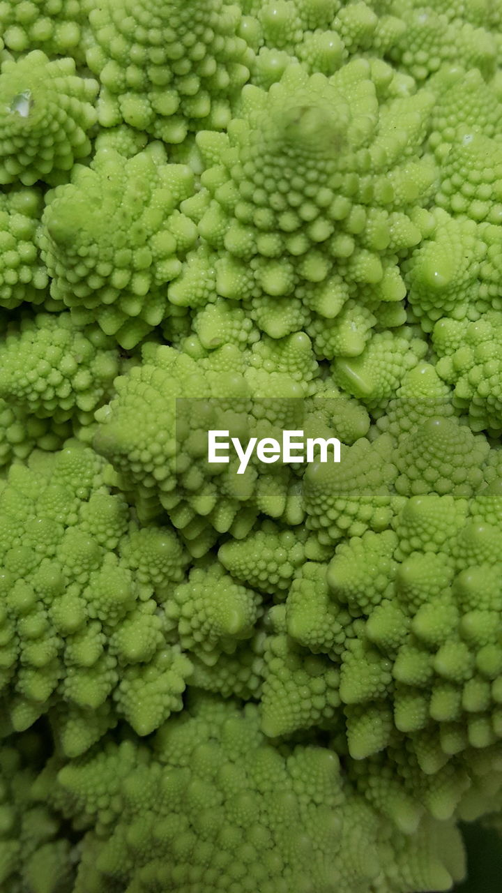 green color, vegetable, backgrounds, raw food, pattern, food, food and drink, healthy eating, full frame, textured, close-up, no people, cauliflower, freshness, nature, day