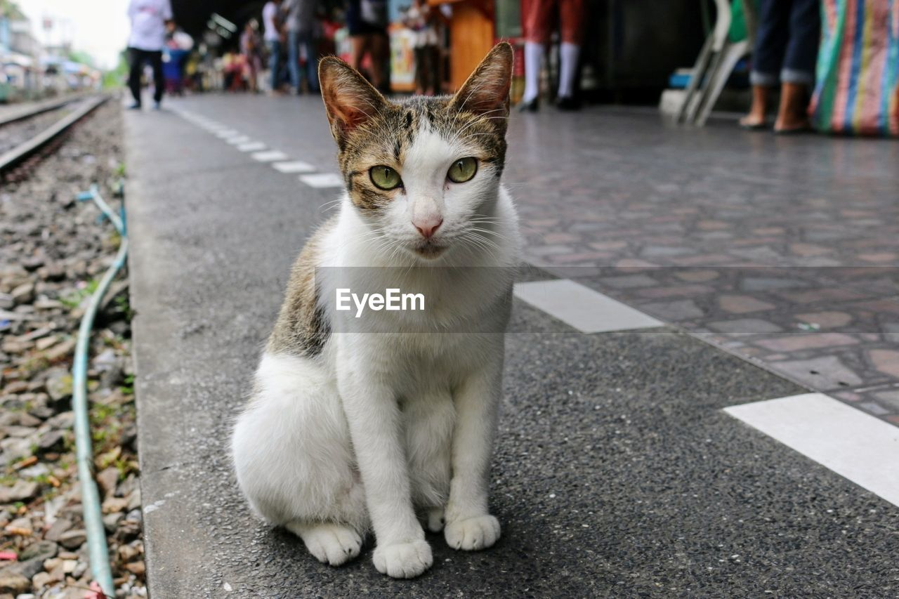 domestic, pets, domestic animals, mammal, domestic cat, one animal, cat, vertebrate, feline, focus on foreground, looking at camera, street, portrait, city, incidental people, footpath, day, people, whisker, animal eye
