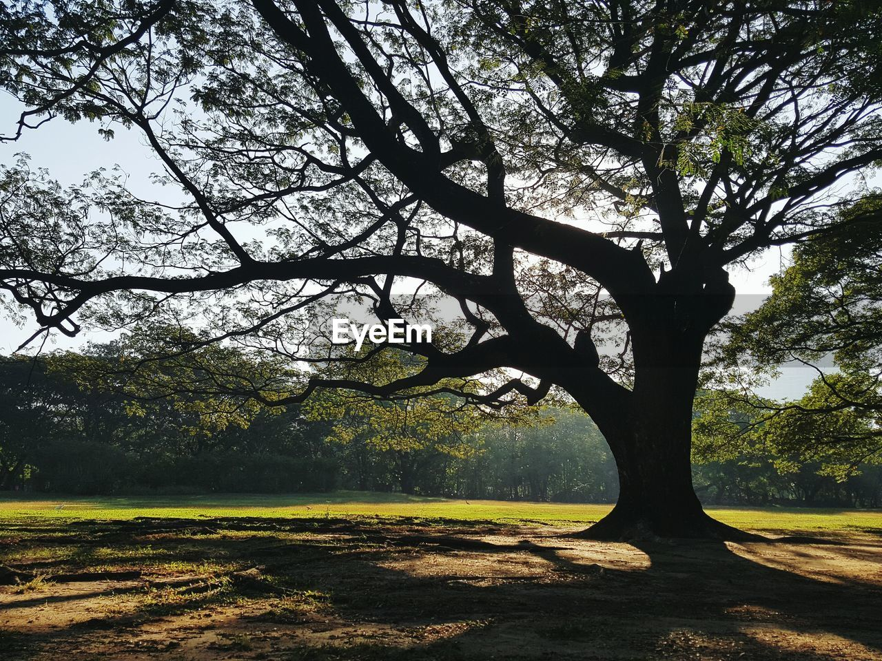 tree, tranquility, growth, nature, branch, landscape, no people, beauty in nature, outdoors, day, scenics, grass, sky