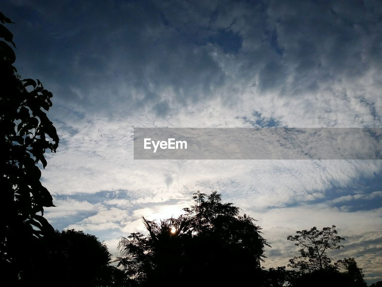 tree, low angle view, sky, silhouette, cloud - sky, beauty in nature, nature, no people, outdoors, tranquility, scenics, day, growth, branch