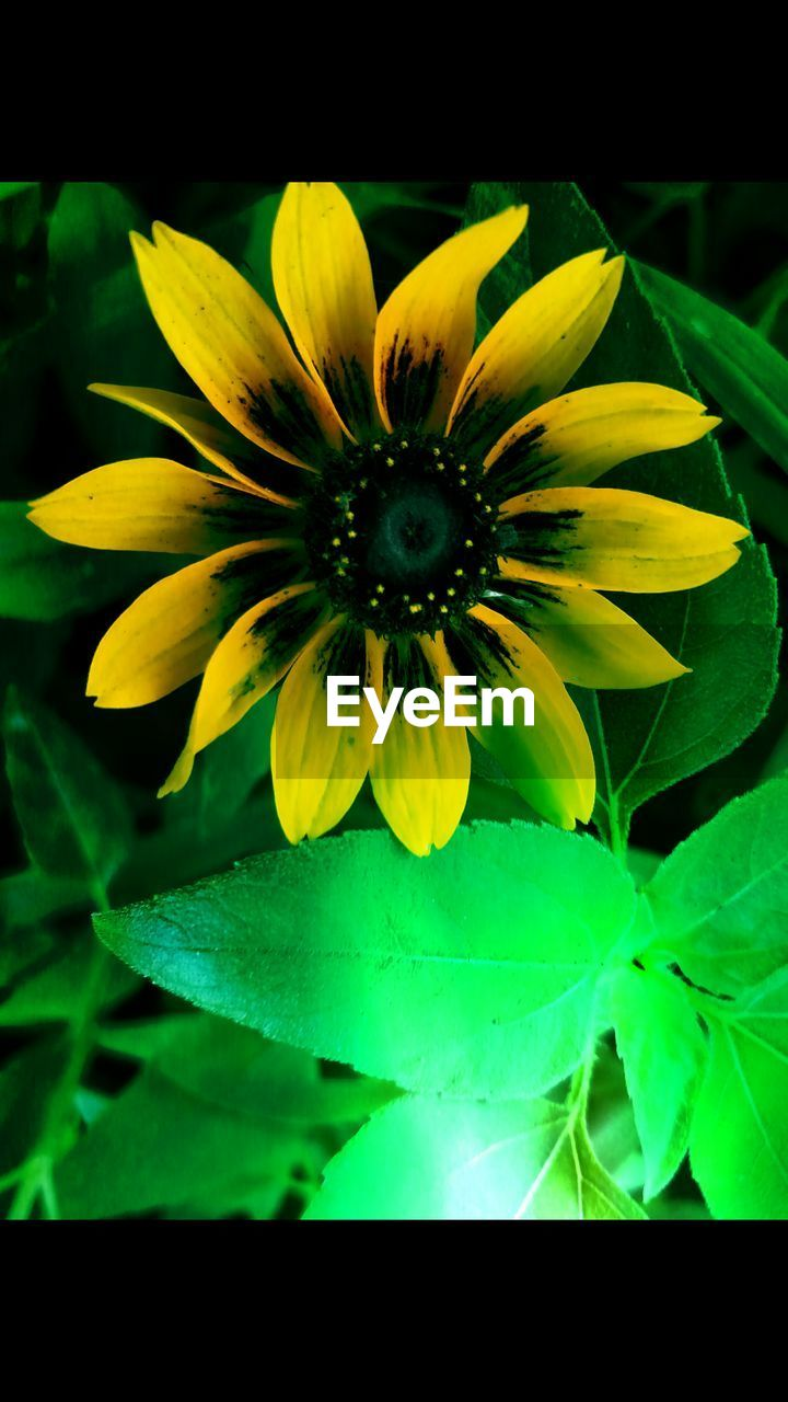 flower, petal, fragility, flower head, freshness, beauty in nature, growth, yellow, plant, nature, no people, leaf, close-up, one animal, pollen, day, outdoors, animal themes, blooming
