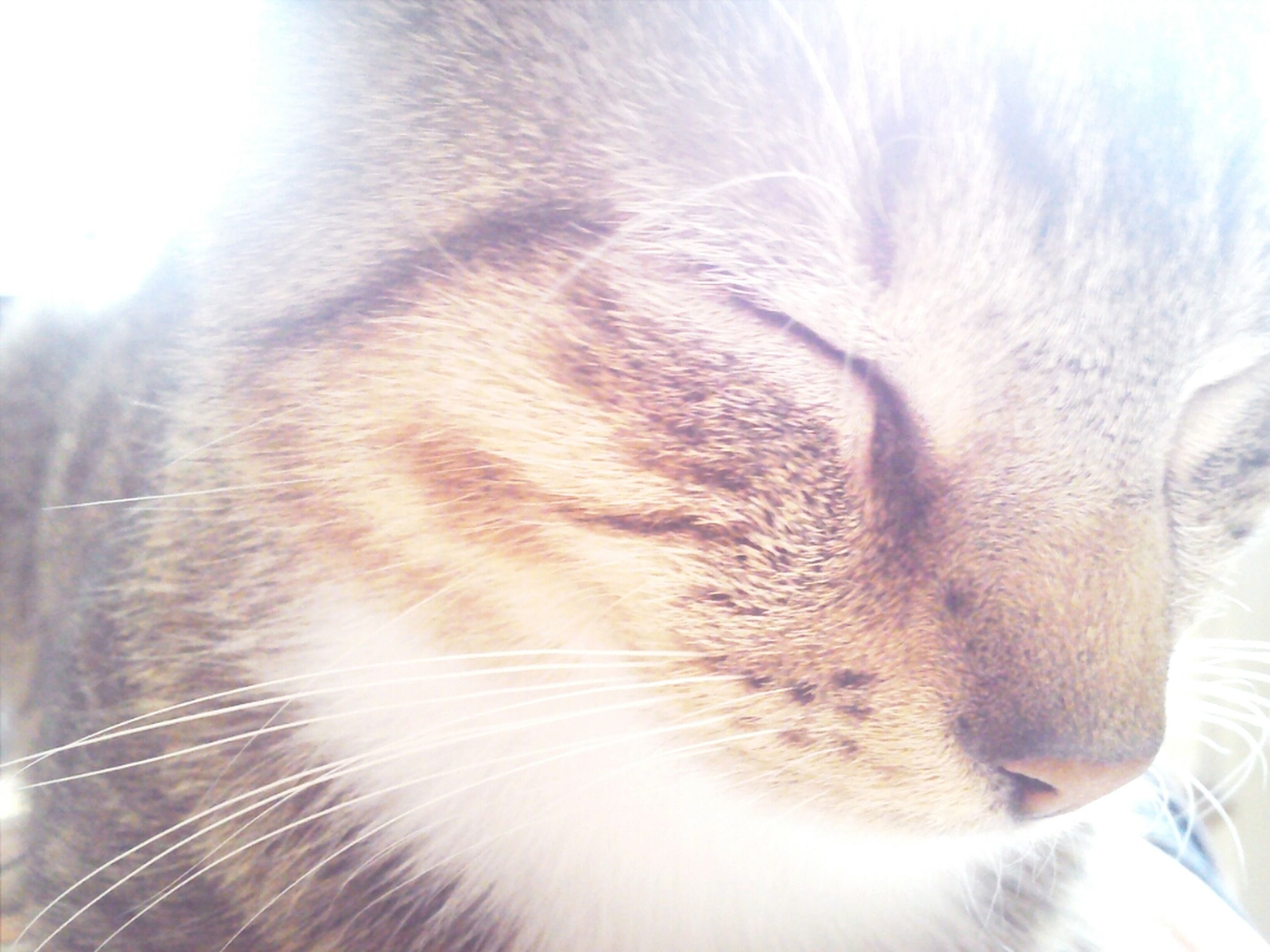 domestic animals, pets, one animal, animal themes, mammal, domestic cat, cat, feline, whisker, indoors, animal head, close-up, animal body part, part of, looking away, animal eye, no people, animal hair, relaxation, eyes closed