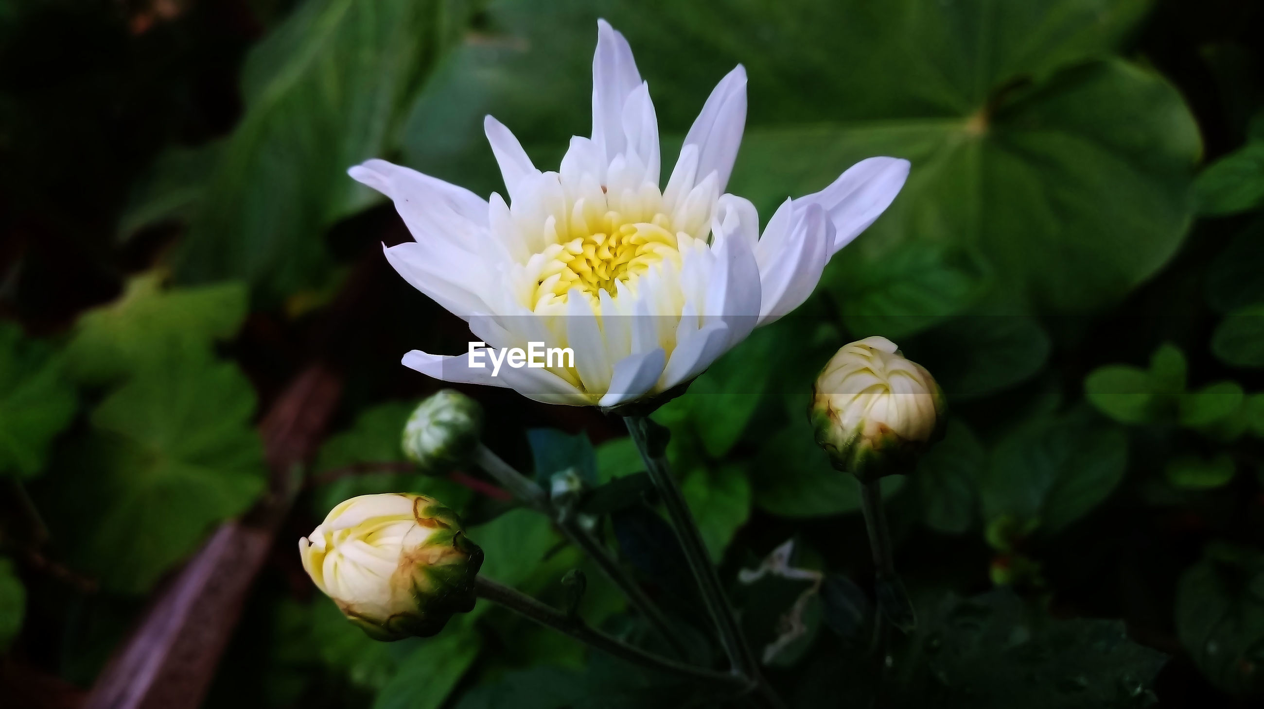 flower, flowering plant, vulnerability, fragility, plant, beauty in nature, freshness, petal, growth, close-up, flower head, inflorescence, white color, nature, focus on foreground, no people, leaf, day, botany, yellow, outdoors, pollen