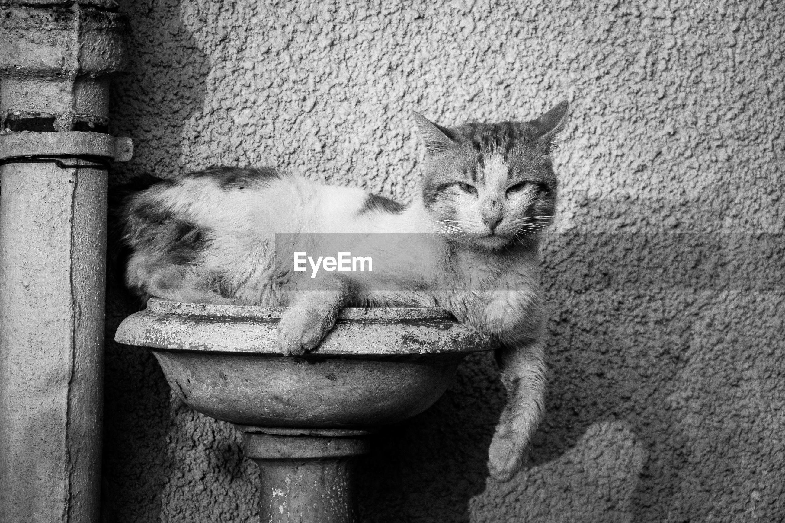 Portrait of cat sitting in bird bath against textured wall