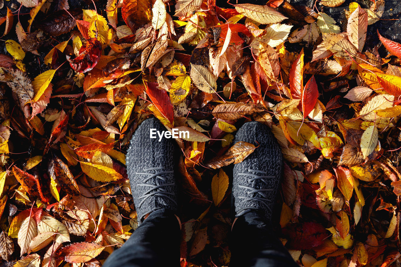 Low section of person standing by dry leaves during autumn