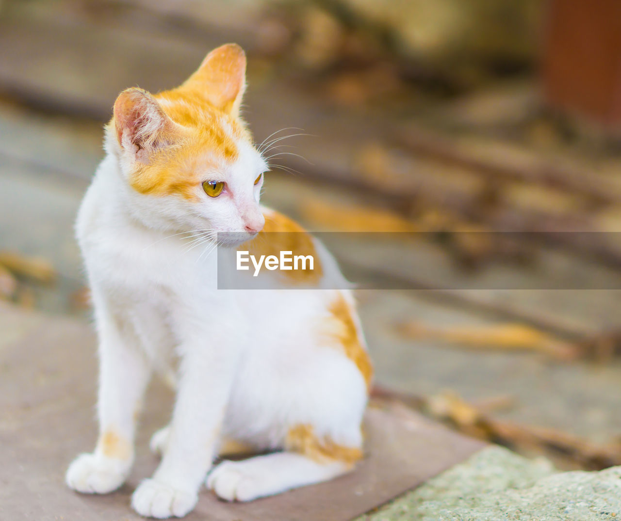 animal themes, animal, mammal, one animal, domestic animals, domestic, pets, domestic cat, vertebrate, cat, feline, looking, looking away, no people, sitting, focus on foreground, day, close-up, selective focus, whisker
