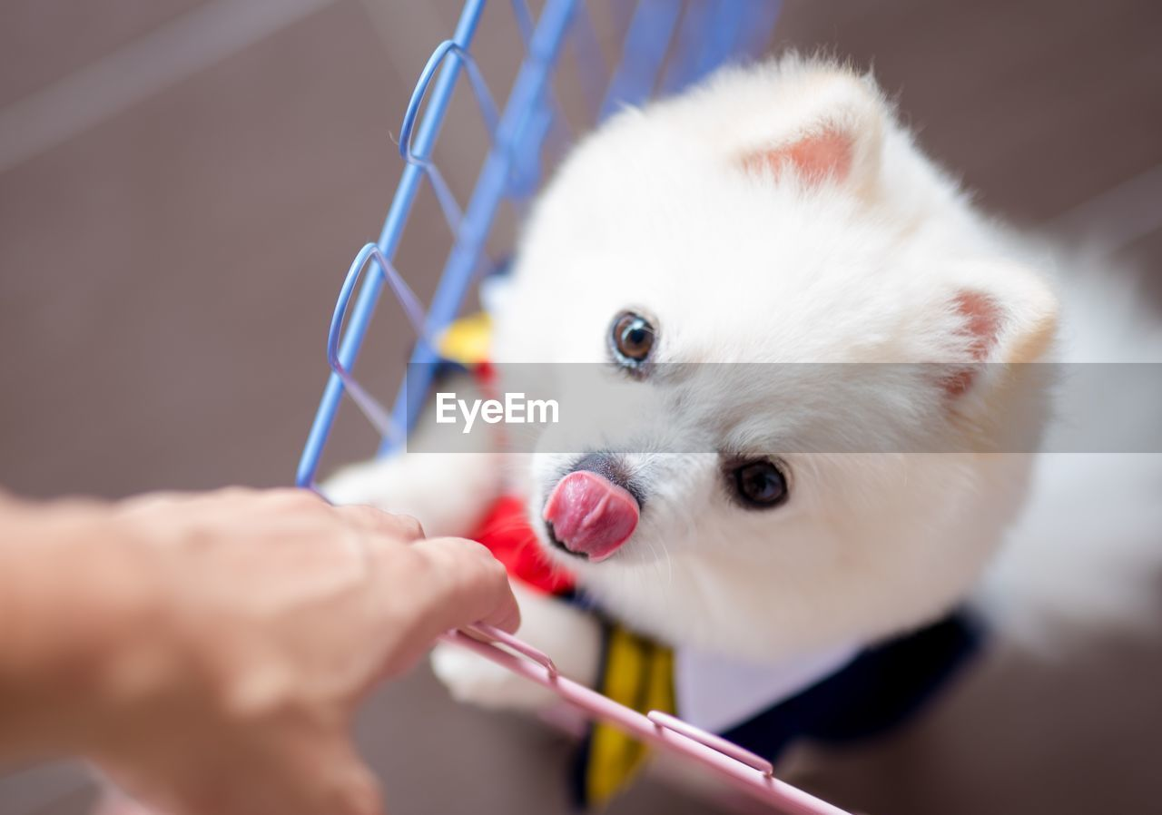 Cropped Hand Of Person With Dog Standing In Shopping Cart