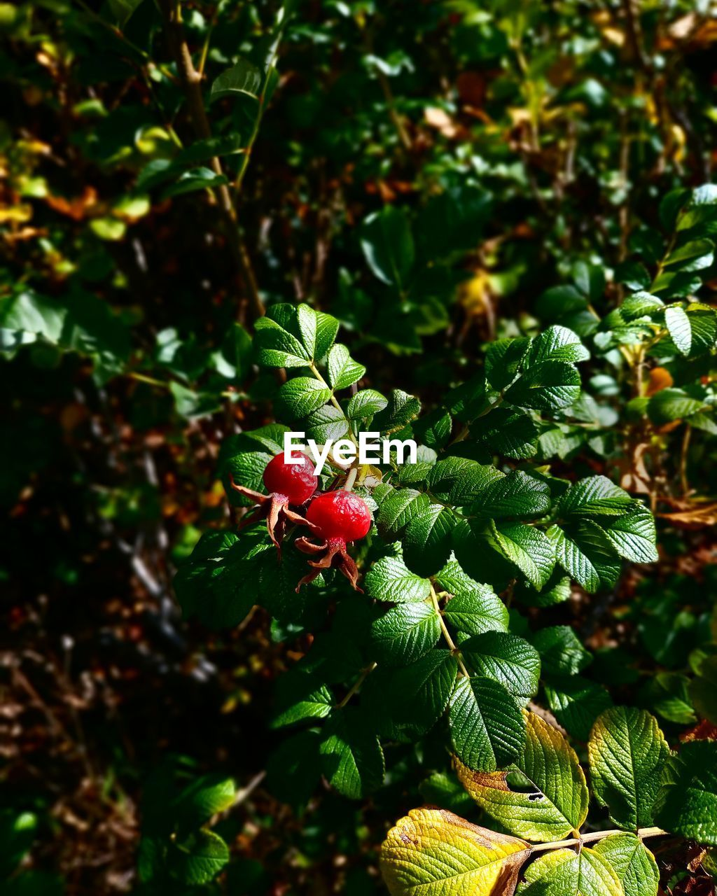 plant, green color, growth, plant part, leaf, beauty in nature, day, no people, nature, animal themes, invertebrate, insect, close-up, animal wildlife, animals in the wild, animal, focus on foreground, one animal, outdoors, red