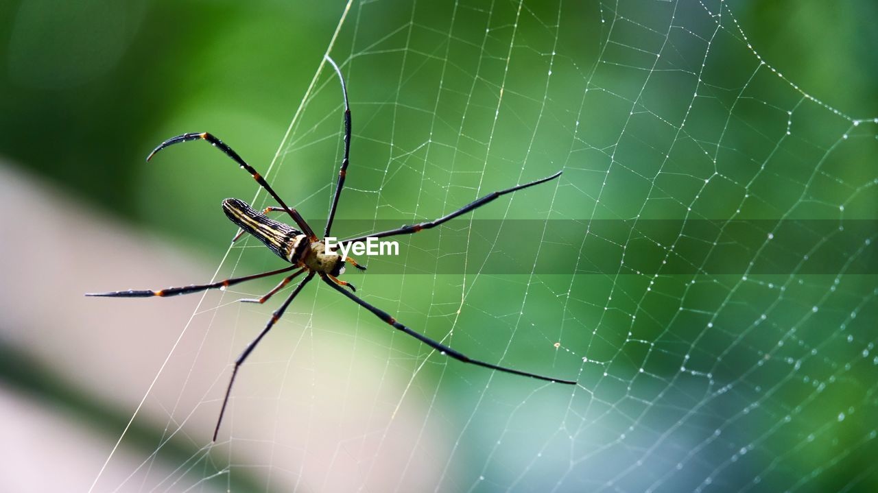 spider web, spider, web, one animal, animal themes, survival, animals in the wild, insect, focus on foreground, nature, close-up, outdoors, animal wildlife, animal leg, day, no people, complexity, fragility