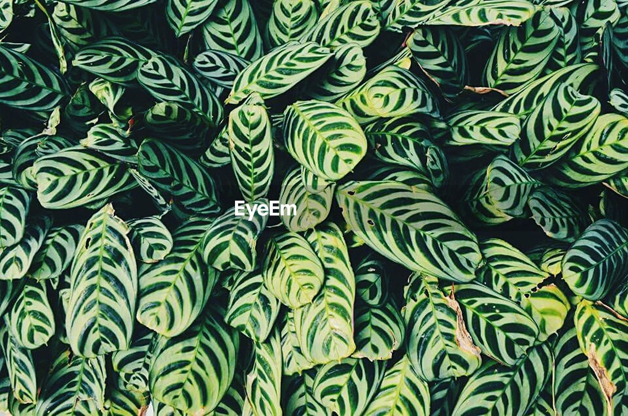 green color, backgrounds, full frame, growth, leaf, plant, no people, nature, day, close-up, outdoors, freshness, beauty in nature