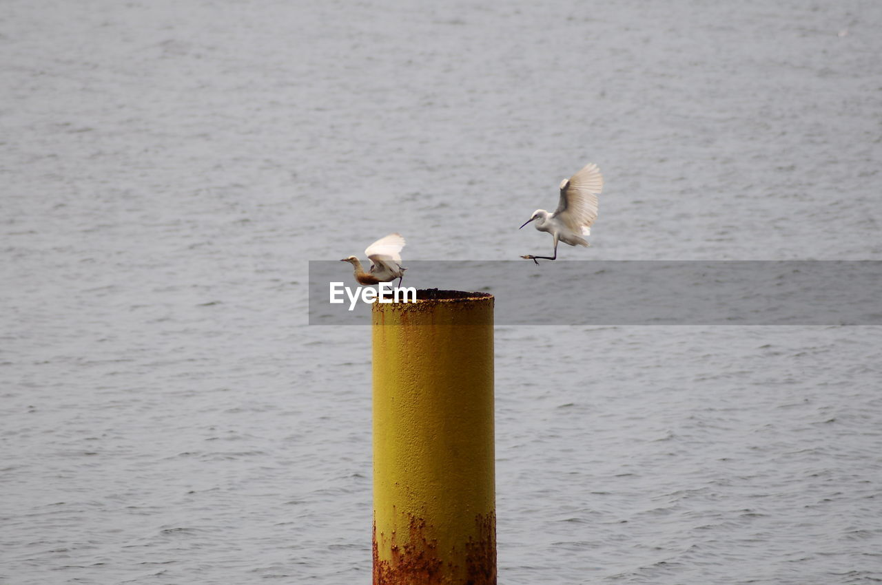 animal, animal themes, vertebrate, bird, animals in the wild, animal wildlife, water, no people, group of animals, seagull, sea, day, perching, nature, focus on foreground, post, outdoors, wooden post