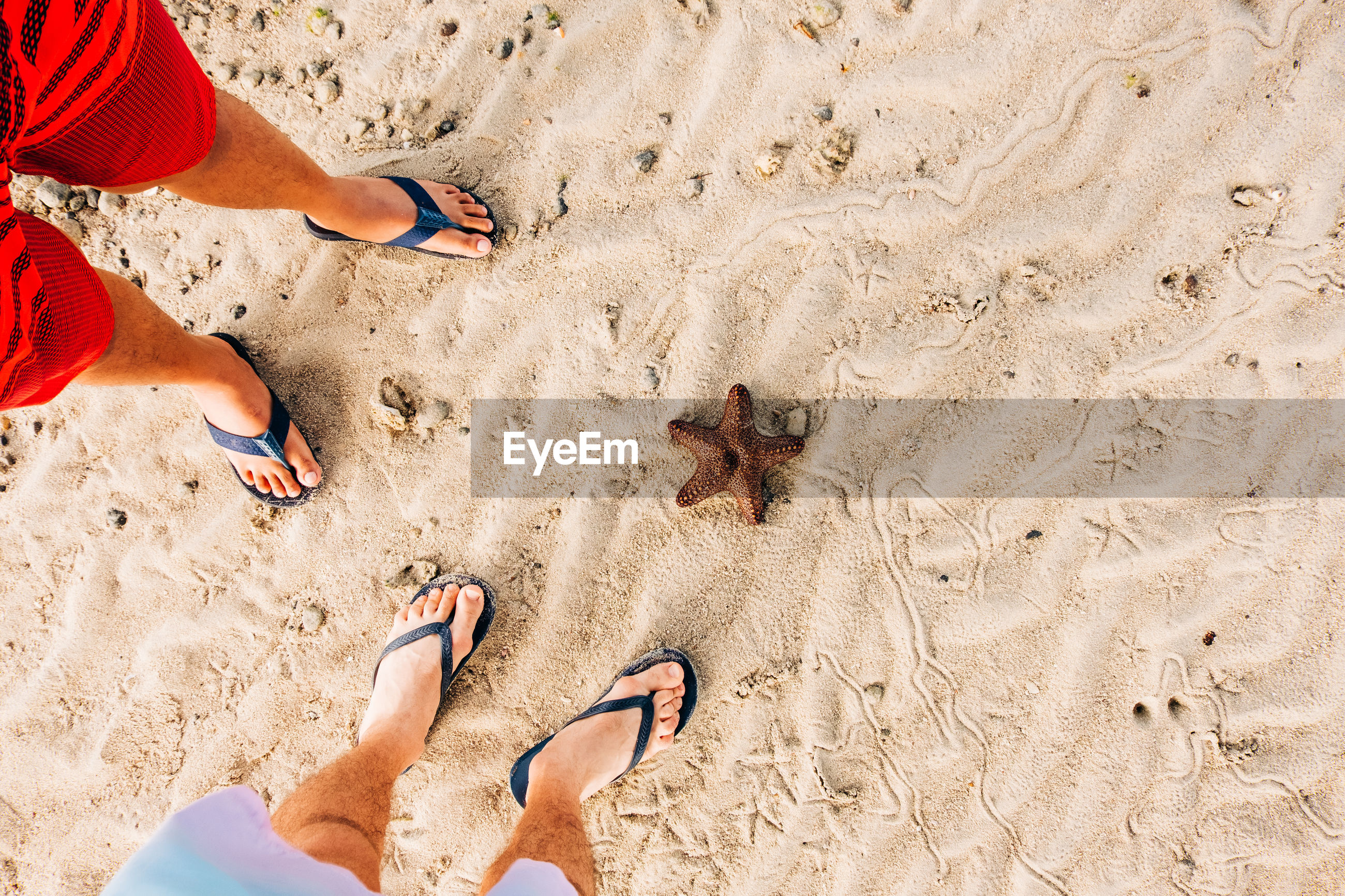 Low section of men standing on sand with starfish