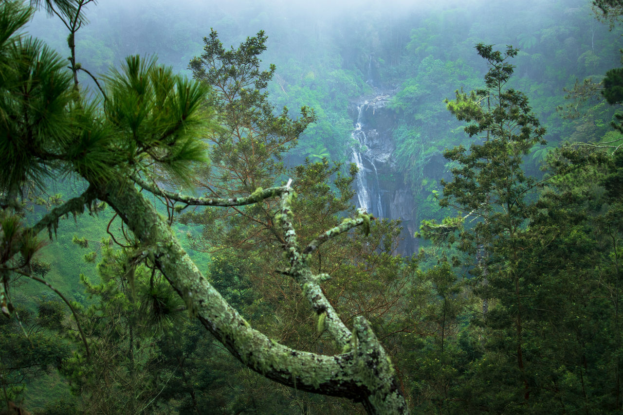 DIGITAL COMPOSITE IMAGE OF TREES AND PLANTS GROWING IN FOREST