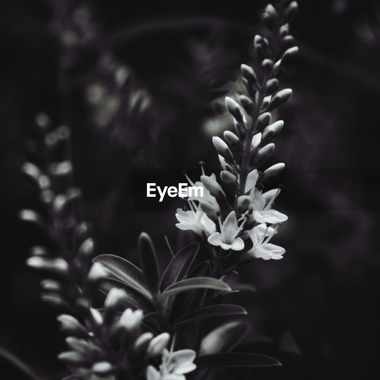 plant, beauty in nature, growth, close-up, selective focus, freshness, no people, flower, fragility, vulnerability, flowering plant, nature, focus on foreground, petal, leaf, plant part, day, outdoors, tranquility, flower head