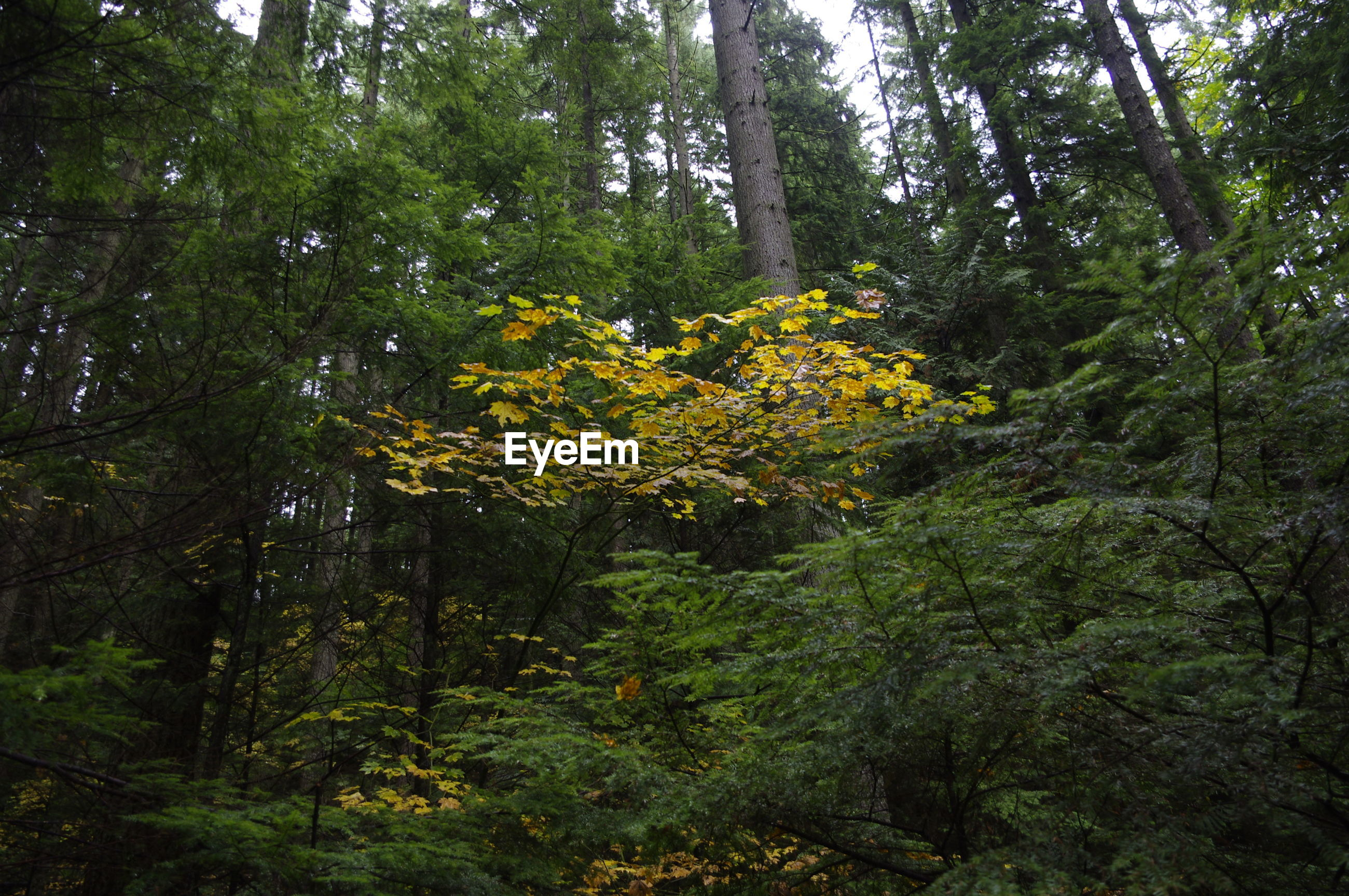 YELLOW FLOWERS GROWING ON TREE IN FOREST