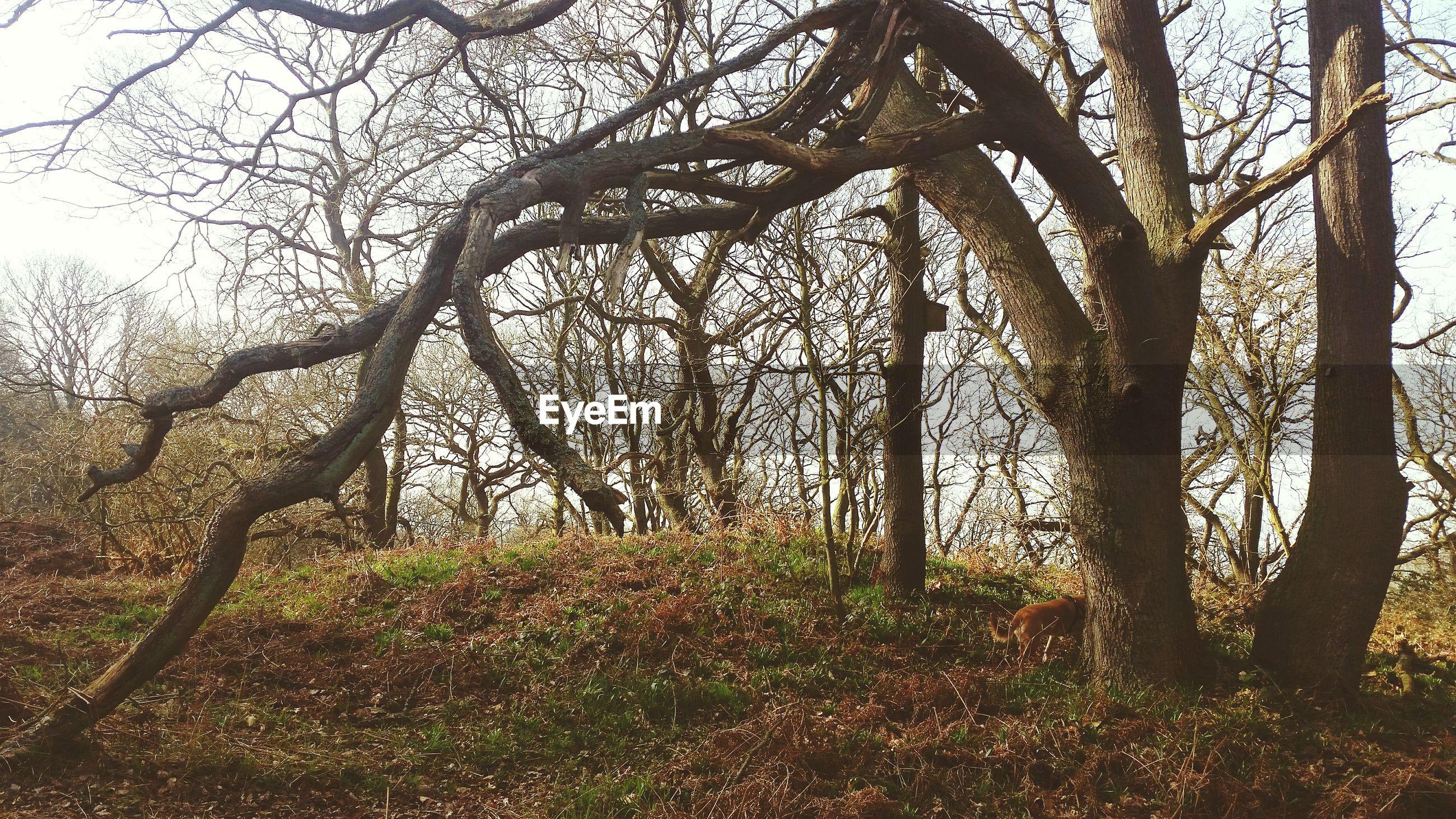 Twisted bare tree