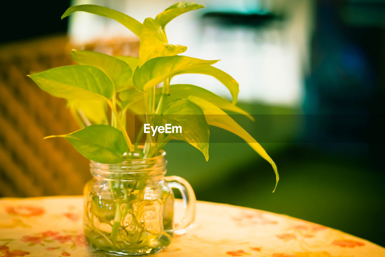 leaf, plant part, plant, table, freshness, focus on foreground, close-up, nature, no people, glass - material, jar, flowering plant, food and drink, food, green color, transparent, container, flower, vase, yellow, leaves