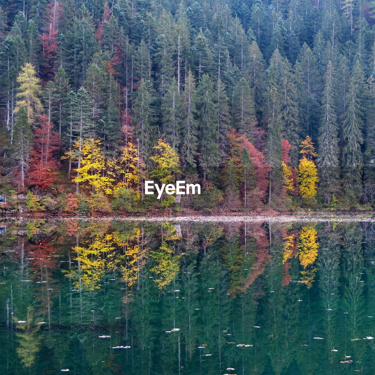reflection, tree, water, lake, plant, forest, nature, land, beauty in nature, scenics - nature, no people, environment, autumn, coniferous tree, day, tranquil scene, landscape, pine tree, waterfront, outdoors, evergreen tree, pine woodland, change